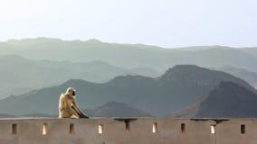 Durchdachter indischer Affe Stockfoto