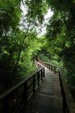 Durchführung zum Wald Stockfotografie