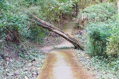 Durchgang im Wald Lizenzfreies Stockbild