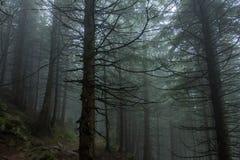 Durchlaufen den Nebel Lizenzfreies Stockbild