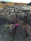 Durchschnittliche Felsen der Blume Stockfoto