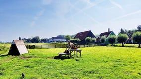 Durchstreifende Ziegen in Zaanse Schans, die Niederlande Stockfotografie