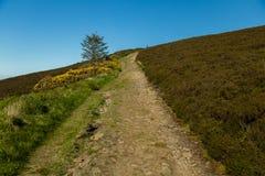 Durchtränken Sie Spur herauf Seite des Hügels Stockbilder