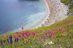 Durdle Door - Beautiful beaches of Dorset, UK. Durdle Door and beaches of Jurassic coast in England royalty free stock images