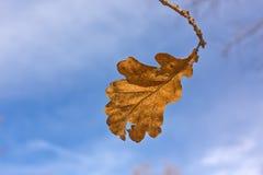 Dure a folha do verão Foto de Stock