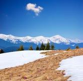 Salte nas montanhas e nas primeiras flores Fotografia de Stock Royalty Free