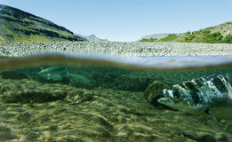 Durée sous-marine Images stock