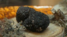Dure zeldzame zwarte truffelpaddestoel stock videobeelden