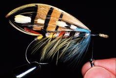Durham leśniczego łososiowa komarnica Zdjęcia Royalty Free