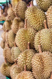 Durian στην αγορά Στοκ Φωτογραφία