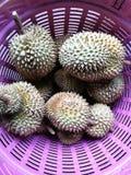 Durian король плодоовощ Стоковое фото RF