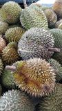 Durian Fotografia de Stock Royalty Free
