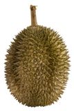Durian. The spiky fruit called the Durian otherwise known as the king of the fruits. Inside the thorny exterior lies a creamy fleshy fruit that smells rather Stock Photography