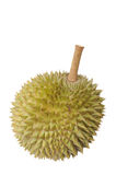 Durian Στοκ εικόνα με δικαίωμα ελεύθερης χρήσης