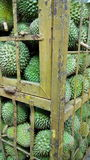 Durian immagine stock