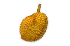 Durian Royalty-vrije Stock Afbeeldingen