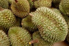 Durian Foto de Stock