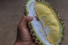 Durian fotografia stock libera da diritti