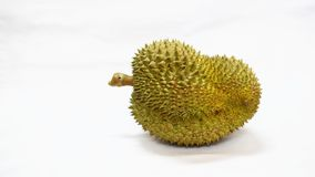 Durian obrazy royalty free