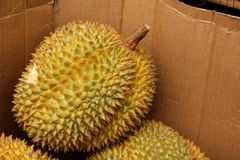Durian Zdjęcie Royalty Free