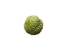 Durian Foto de Stock Royalty Free
