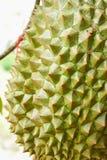Durian Foto de archivo libre de regalías