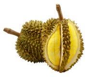 Durian aislado Imagenes de archivo