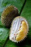 Durian. On banana leaf, triopical local fruit of Kapong, Phang Nga, Thailand Stock Image