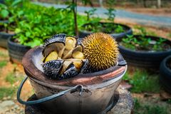 Barbecue durian on stove. The durian is brought to burn on stove to add flavor. Eat hot durian with extra nutrients Royalty Free Stock Photography