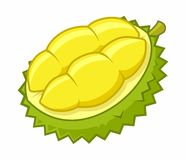 Durian Cartoon Vector Illustration Royalty Free Stock Image