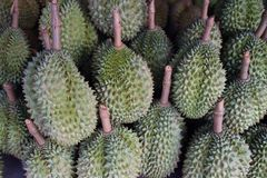 Durian Chanee Royalty Free Stock Image
