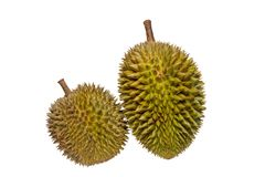 Ovoid and nearly round shaped of Durian fruits isolated on white background. Durian is consumed fresh as fruit or food products such as candy, ice cream and stock photo