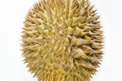 Ovoid shaped of Durian fruit isolated on white background. Durian is consumed fresh as fruit or food products such as candy, ice cream and durian puffs after stock photography