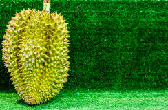 Durian, the Controversial King of Tropical Fruits. Durian fruit, King of fruits,  Southeast Asia as the king of fruits, Thai Fruits : Durian, the Controversial Royalty Free Stock Images