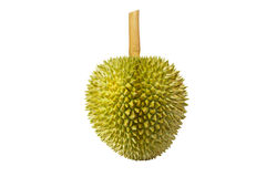 Durian d'isolement Photo stock