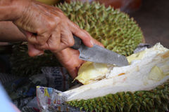 Durian d'ouverture avec les mains de dames âgées à la boutique de vendeur de fruit Photos stock