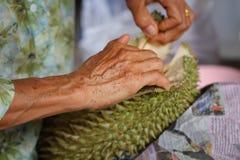 Durian da abertura com mãos das mulheres adultas na loja do vendedor do fruto Imagem de Stock