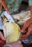 Durian da abertura com mãos das mulheres adultas na loja do vendedor do fruto Foto de Stock
