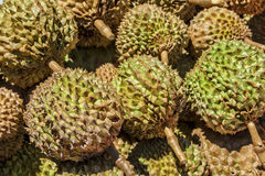 Durian de Filipinas Imagem de Stock Royalty Free