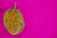 Durian de la fruta tropical en fondo rosado Plantilla entera de la bandera del durian Fruta sabrosa con el olor imágenes de archivo libres de regalías