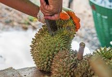 durian del corte Fotografía de archivo libre de regalías