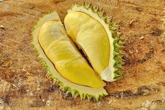 Durian del jardín Imagen de archivo libre de regalías