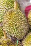 Durian della frutta tropicale Immagine Stock
