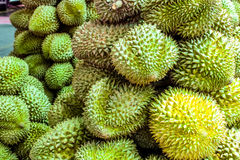 Durian den kontroversiella konungen av tropiska frukter Royaltyfri Bild