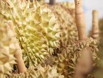 Durian do fruto de Tailândia pronto para comer da árvore no ouro amarelo do jardim fotos de stock