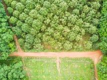 Durian drzew sad i gumowych drzew plantacja Obraz Royalty Free