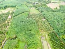 Durian drzew sad i gumowych drzew plantacja Fotografia Royalty Free
