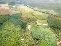 Durian drzew sad i gumowych drzew plantacja Fotografia Stock