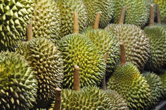 Durian Dużo Ustawia Zdjęcie Stock