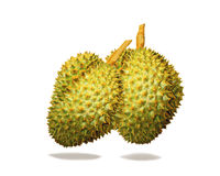 Durian, Durio-zibethinus linn Stock Fotografie